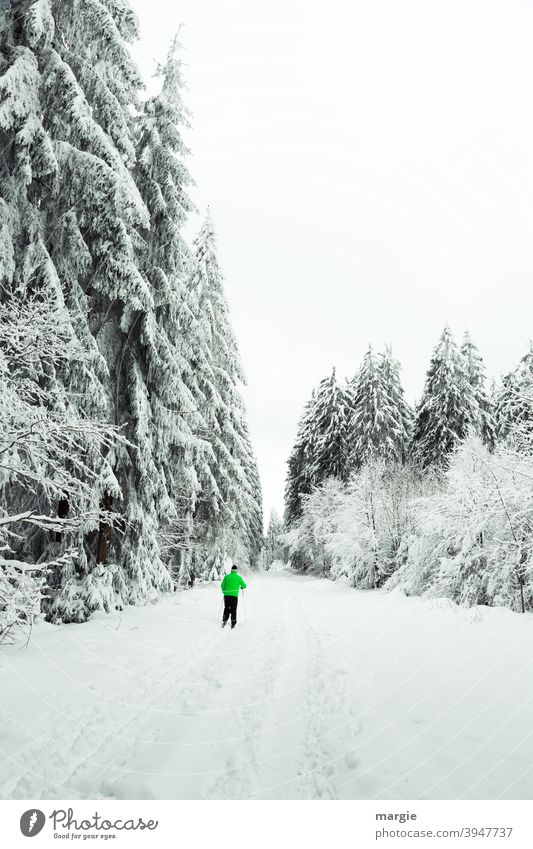 A path in deep winter with a skier, a snowy landscape with snowy trees Winter skis Snow Sports Skiing Winter sports Ice Tracks Cross-country ski trail Day Skis
