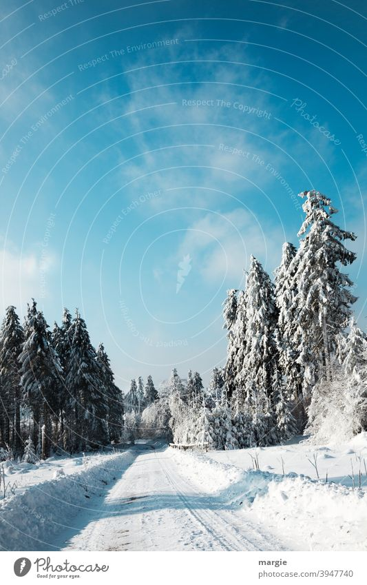 Winter road in deep snow covered forest Snow Tree Landscape Hoar frost Cold Sky Frost Blue Frozen Forward Central perspective Light Deserted Exterior shot