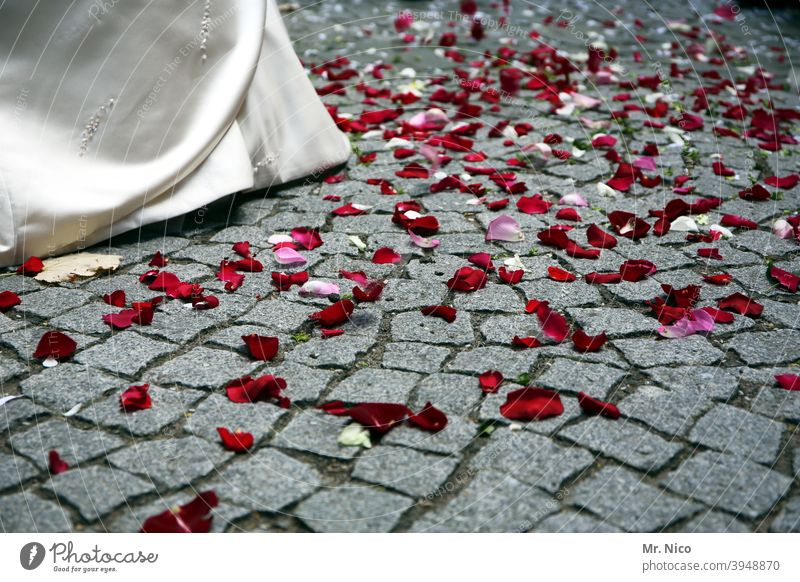 Now hurry up before he changes his mind. Bride Wedding dress Love Elegant Feasts & Celebrations Rose leaves Paving stone Lanes & trails Tradition White Happy