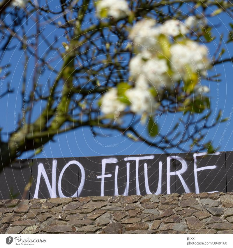 No Future antagonism future Fear of the future Blossom Flower magic blossom Tree Summer Spring Sky Cloudless sky Wall (barrier) blurred Depth of field graffiti