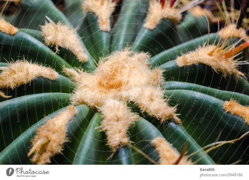 cactus close up macro closeup detailed green green cactus orange plant