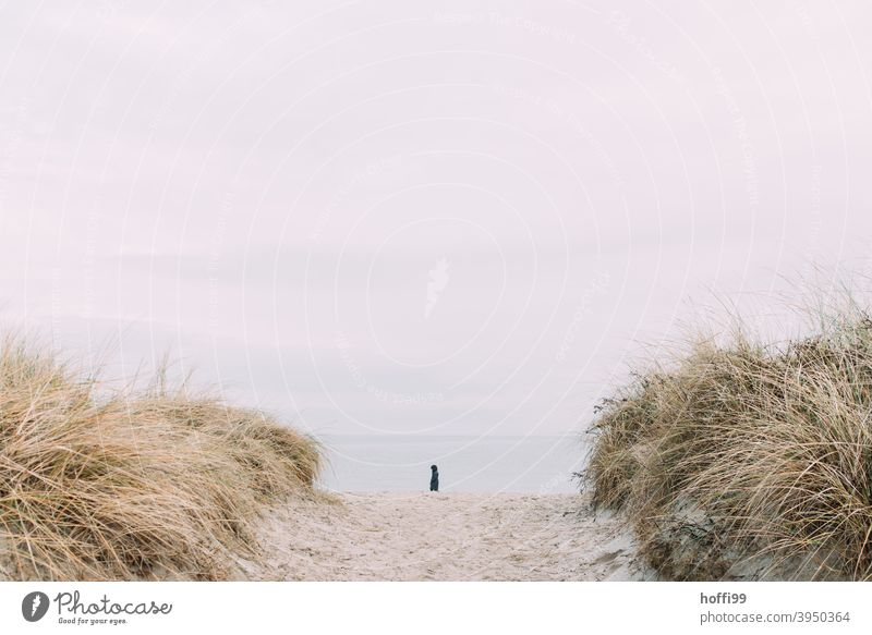 a lonely beach walker between the dunes Human being Beach Lanes & trails North Sea Mud flats Loneliness coast Silhouette Horizon Winter Going by oneself