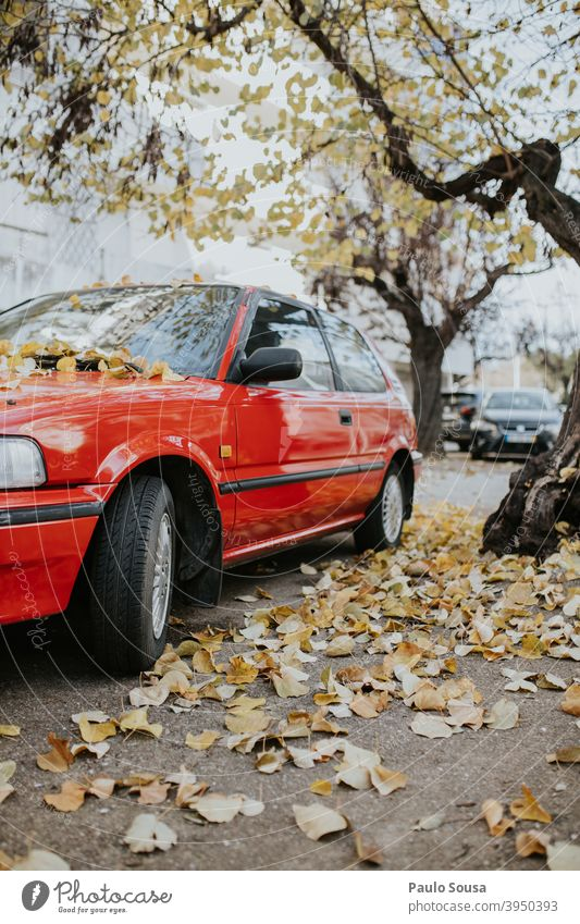 Red car with Yellow leaves Autumn fall Winter Car autumn automobile Vintage car Transport Autumn leaves Motoring road Deserted Leaf Colour photo Exterior shot