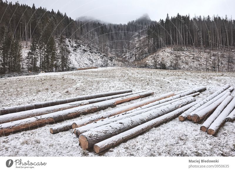 Mountain landscape with timber logs on a snowy day. Koscieliska Valley mountains forest winter Tatra tree nature forestry trunk fog outdoor season