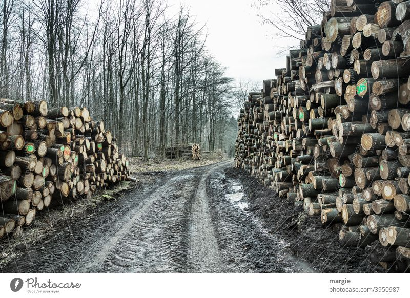 dead | but nothing is lost to nature! Wood Tree Forest Tree trunk Deserted Exterior shot Nature Forestry Stack of wood Timber Fuel Environment Supply Log Cut