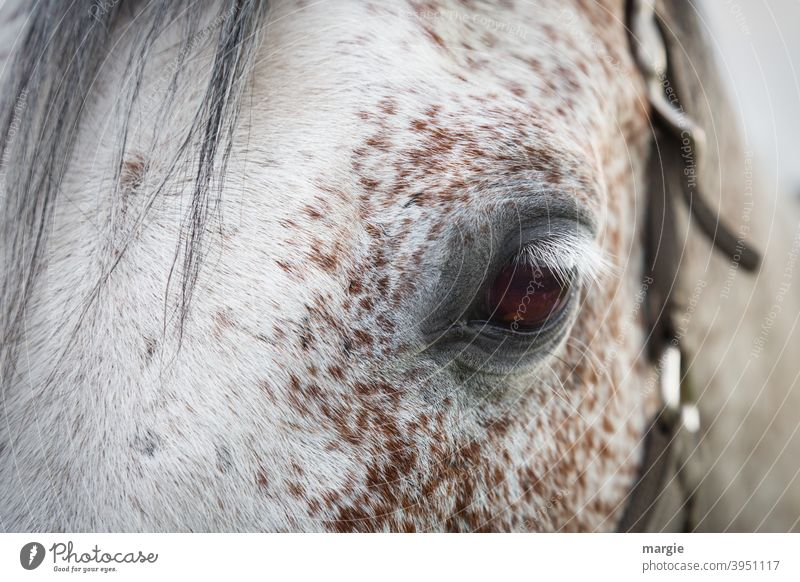 horse's eye Horse Animal Mane Nature Looking Eyes Animal portrait Deserted Exterior shot Farm animal Animal face Horse's head Halter Gray (horse) Pony Eyelash