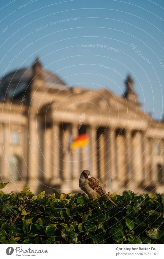 A bird in front of the German Bundestag sits on a bush in summer under a blue sky in Berlin. Downtown Tourism Capital city Deserted City urban Town