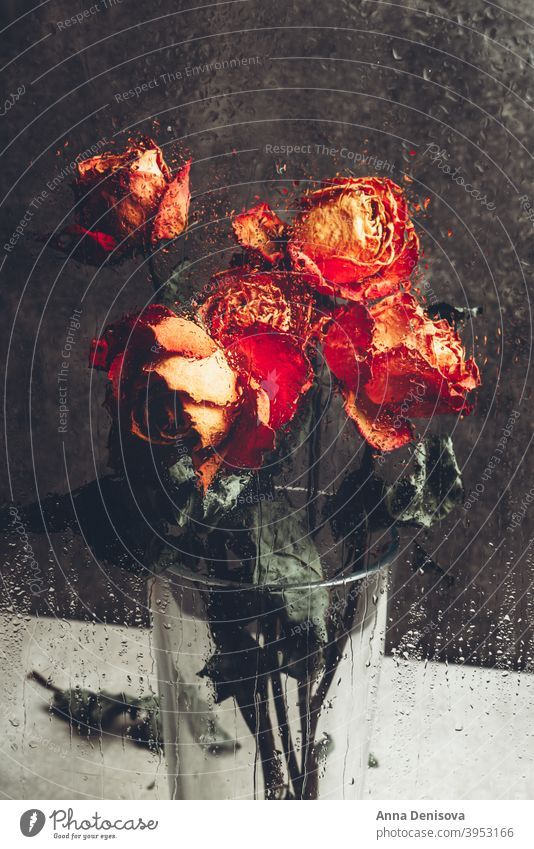Bunch of beautiful faded flowers through the glass with rain drops rose dry petal stem leaf heart orange window water broken day valentine love death plant old