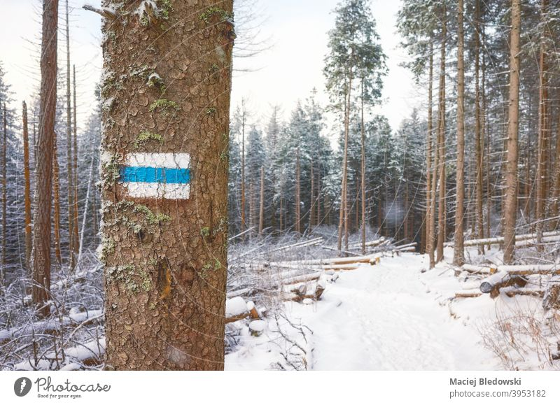 Hiking trail on a tree in snow covered Tatra mountains, Poland. winter forest path sign landscape hike marker nature season snowfall Tatra National Park Tatry