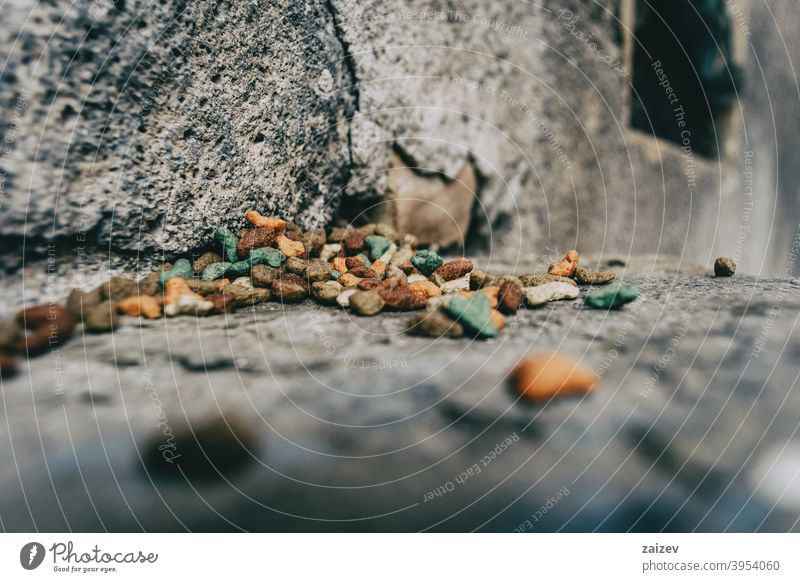 cat food in a corner of a street poor horizontal help charity protection hunger lots hope volunteer caring pet hungry spilling vitamins survival grained kitten