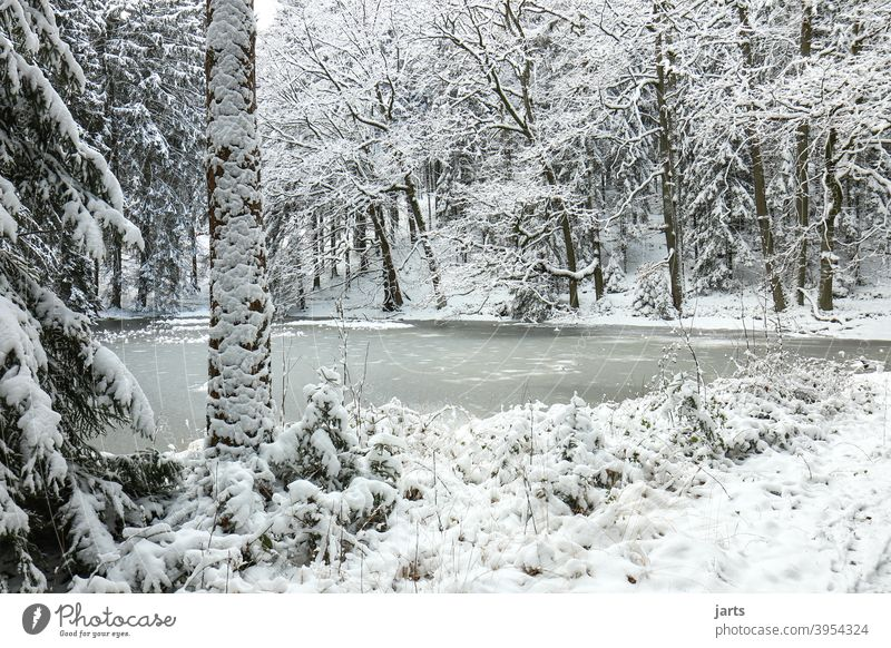 Idyllic forest pond in winter Winter frozen Forest Snow Cold Ice spessart Frost Nature Tree Exterior shot White Deserted Landscape Calm Loneliness naturally