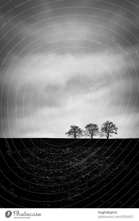 Trio on the horizon trees Tree Trees on the horizon three trio Clouds Nature Sparse Winter Dark Gloomy Landscape Cold tranquillity Sky Black & white photo