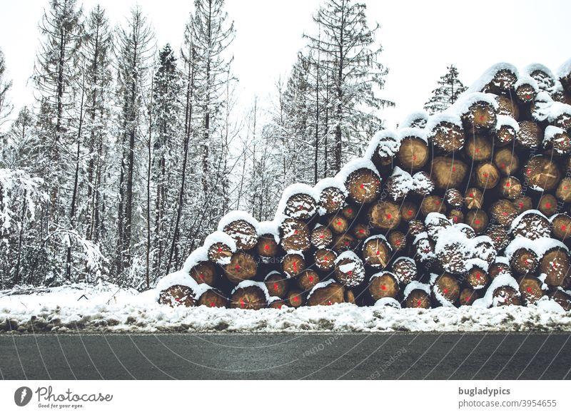 Trees vertically and horizontally in the snow trees Tree trunk tree trunks Snow Winter Firewood Fuel cord cubic metre Wood Forest Stack of wood Forestry Log