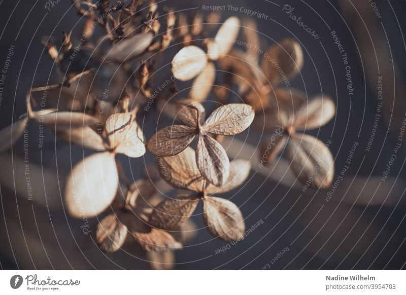 Dried Flower Shriveled Plant Nature Blossom Faded Deserted Colour photo Limp Dry Transience Close-up Autumn Shallow depth of field Day Wild plant Exterior shot