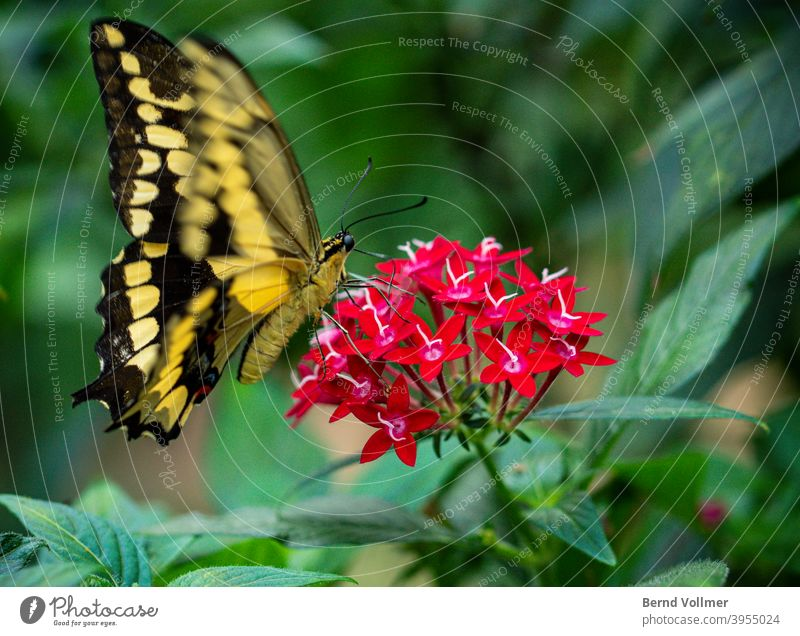 Butterfly on flower Flower red blossom red flower Red Green Yellow Black