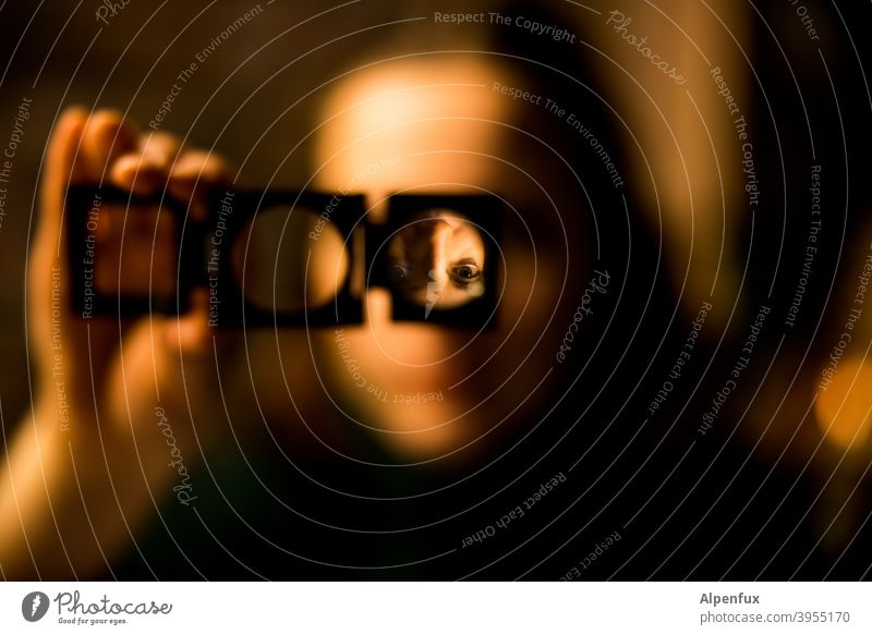 head spinning Magnifying glass Magnifying effect Go crazy Colour photo Close-up Reflection Woman Face of a woman portrait Distorted Twisted World Human being
