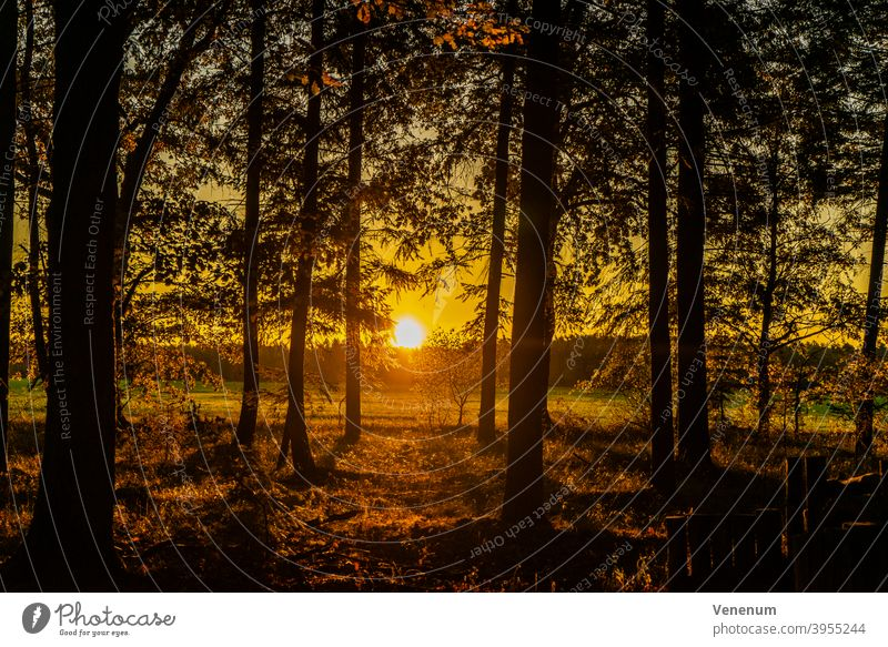 sunrise in autumn in the forest sunup sun rise sun-up first light winter season celestial phenomenon Meadow Pasture Land Forest Tree Trees Sky Clouds dawn