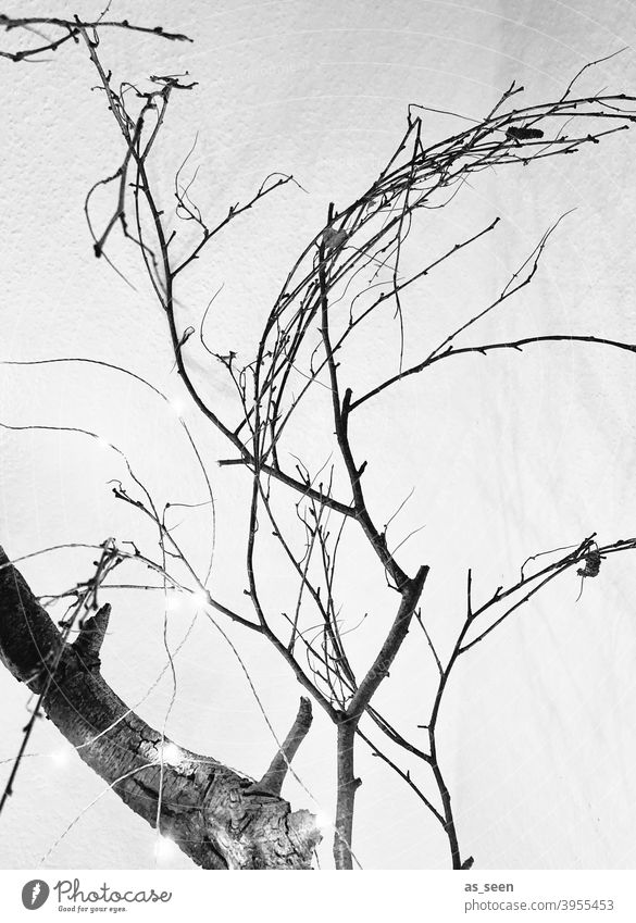 branches and two Twigs and branches Black & white photo White graphically linear Tree Nature Deserted Winter Day Gray Cold Contrast Branch Light Plant Dry