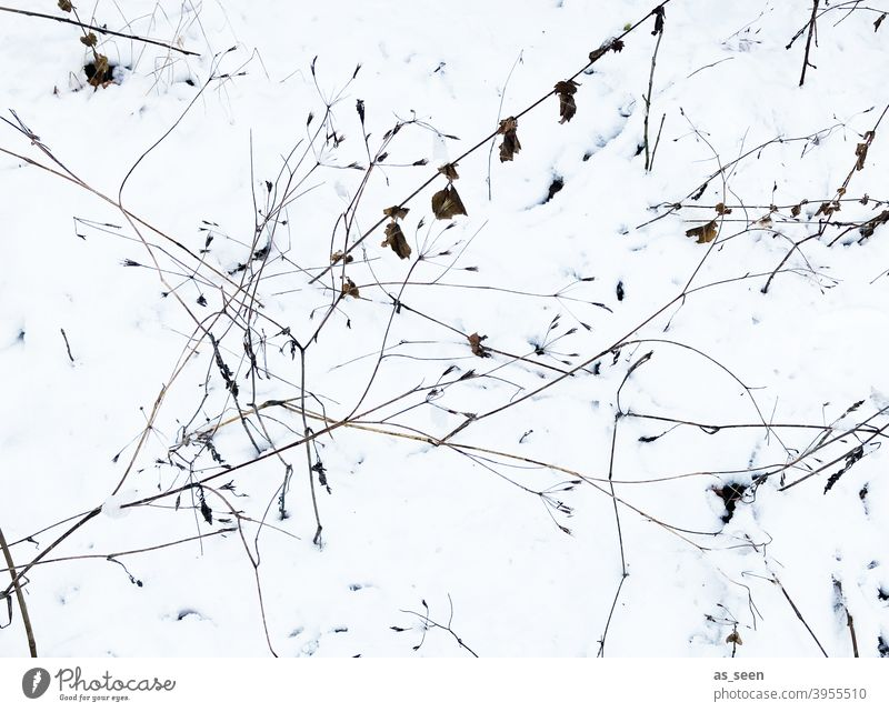 Grasses in the snow grasses Snow Bird's-eye view Nature Plant Exterior shot Deserted Environment Winter graphic graphically White Black Brown Cold Ice