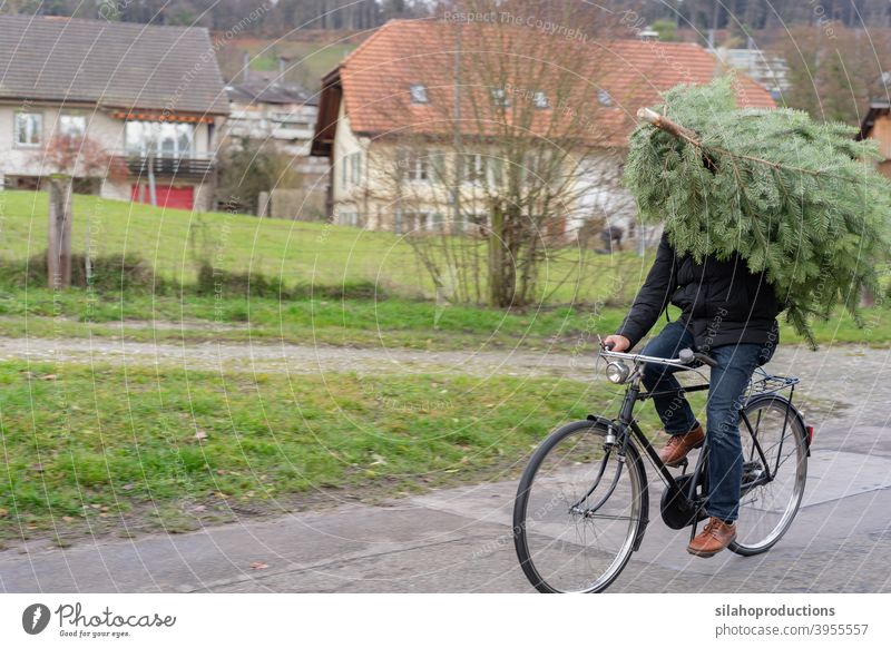 Christmas tree shopping by bicycle. Carefree doing everything by bicycle. christmas holiday winter christmas tree mode of transport merry christmas new year