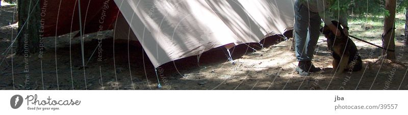 you stay here! Dog Man Tent Forest Clearing Tent camp Legs Wait Floor covering youth legion Exterior shot