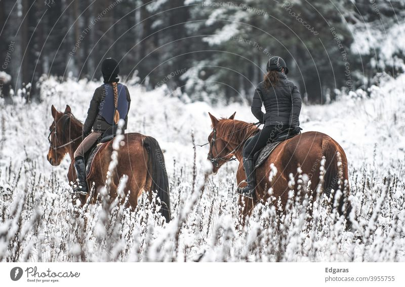 Two persons riding horses in winter Riding Horse two people women Winter Snow White Ride Animal Exterior shot Rider Equestrian sports Sports Nature