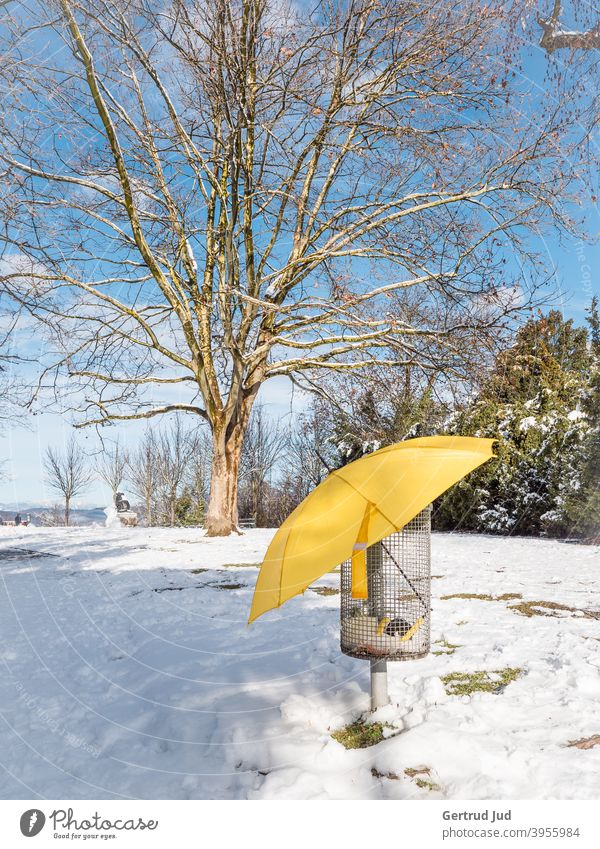 Yellow umbrella in a garbage basket in winter landscape Landscape Snow Winter Tree Cold Ice Frost Nature White Exterior shot Deserted Colour photo Sky Sun