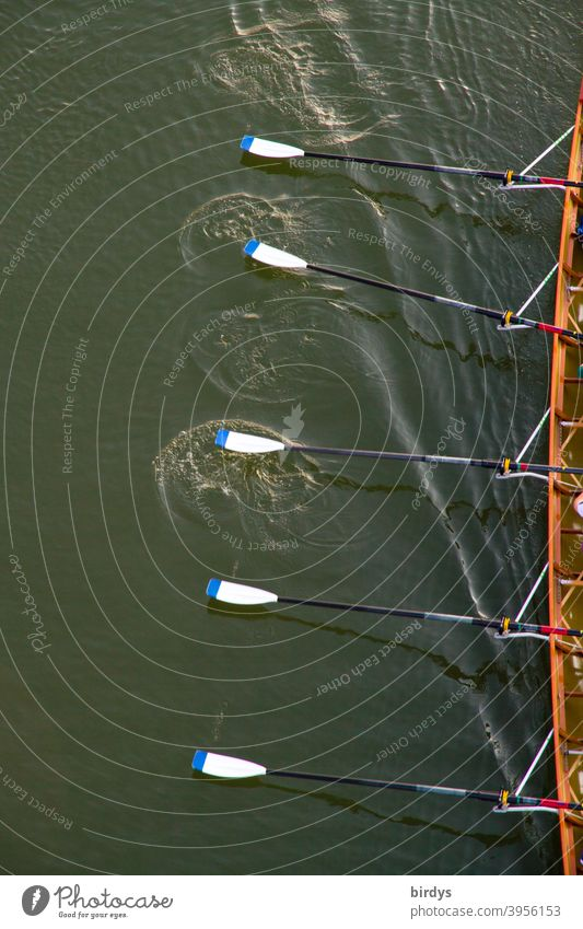 Rowing boat in cutaway with rowing blades in motion. Rowing, team sport, bird's eye view Rowboat Sports Team Sports Water Aquatics Movement Teamwork