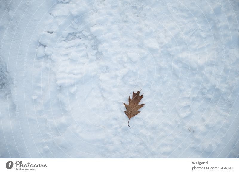 Being alone in winter Leaf on one's own Loneliness Lonely Snow Ground depression Winter winter depression sad Sadness unhappy Think dejected Pensive Earnest