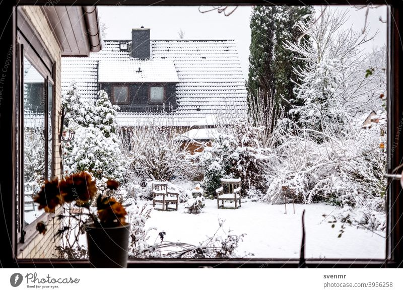 Calmness of first snow Winter Winter mood Snow Snowfall Cold Winter's day City House (Residential Structure) Garden White Snowscape Ice Relaxation Still Life