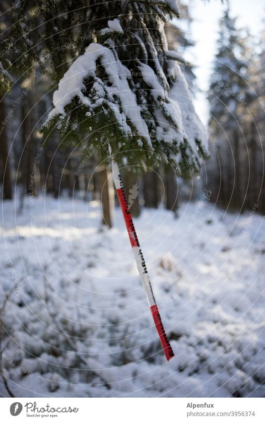 rare fruit Forest Snow barrier tape corona cordon Safety Protection pandemic flutterband Tree Coniferous trees prevention Corona virus guard sb./sth. Contagious