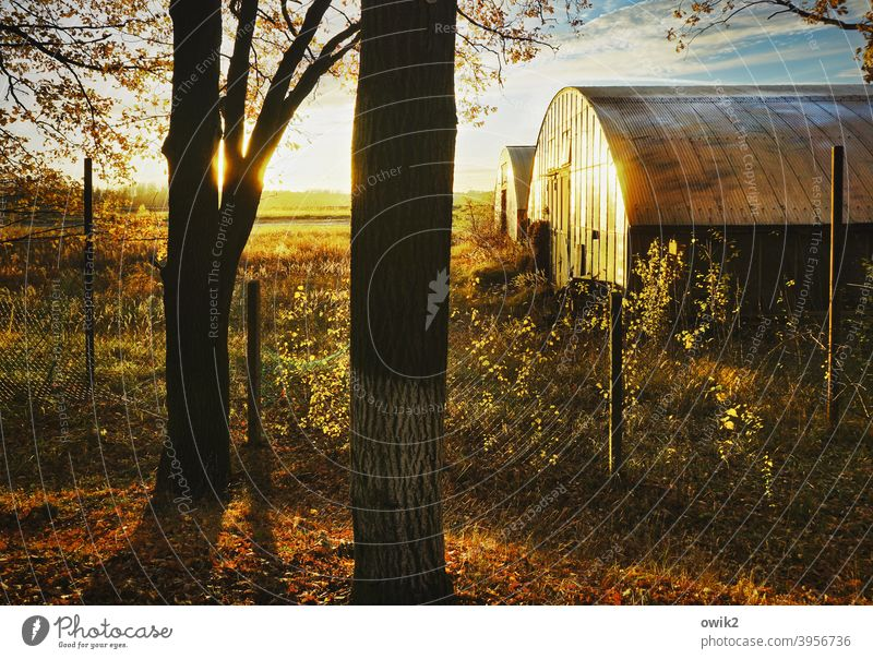 For the tons Hall Storage Fence Wire netting fence Pole Fence post Sun Pattern Wall (building) Facade Sunlight Evening Tree trunk Industrial plant Shadow
