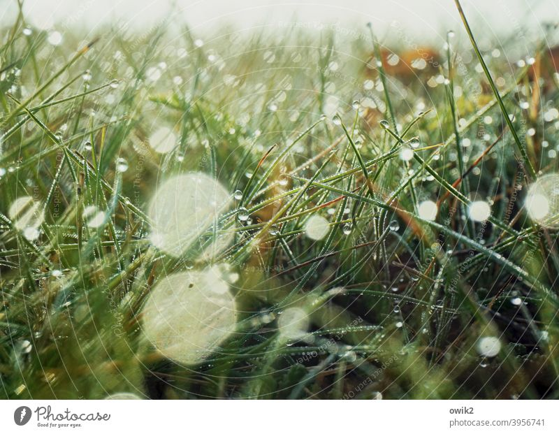 flickering Grass Wild plant Drops of water Beautiful weather out Bright Landscape Delicate Dew Idyll naturally hazy morning light Fresh whirr Small Spring