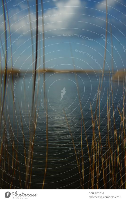Selective focus on the beach lake landscape Schmoel Beach Landscape Nature Common Reed reed Lakeside Autumnal blurriness Nature reserve Breeze Portrait format