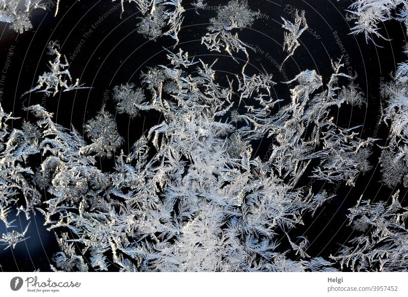 Ice flowers on a window pane , slightly illuminated by the morning sun Frostwork Ice crystal chill Winter Slice Glass Pane Freeze Pattern structure Cold Frozen