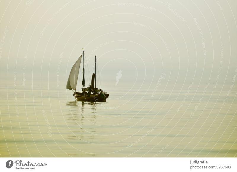Windless, sailboat on the Baltic Sea Sailboat Water Sailing Ocean Vacation & Travel Sailing ship Boating trip Freedom Summer Aquatics Calm slack Light Soft warm