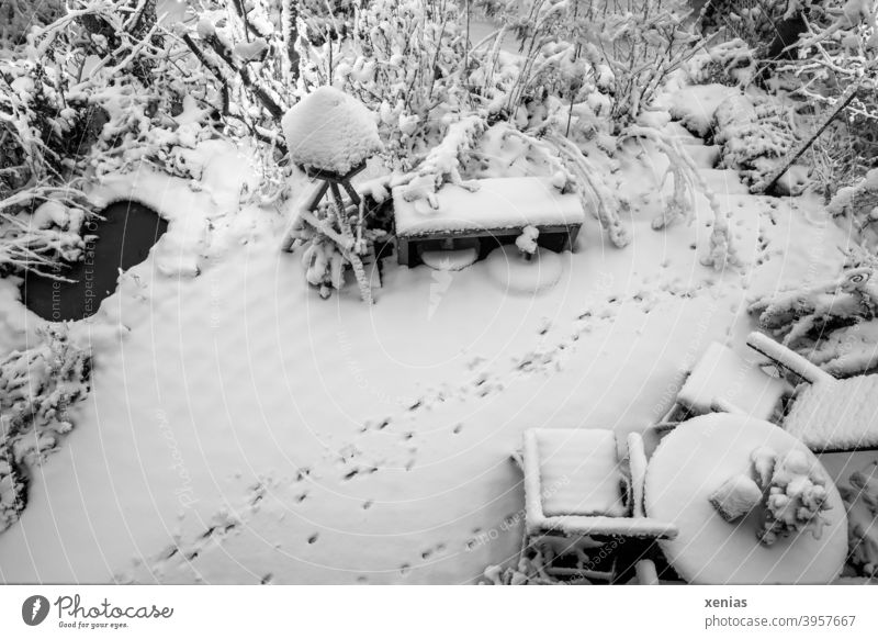 The cat came to visit the garden: black and white shot of a terrace from above in winter with a small pond, bird house, bench, chairs, table and animal tracks in the snow
