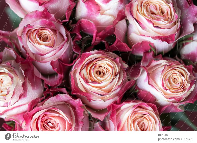 Pink bouquet with romantic not quite fresh roses pink Bouquet Ostrich Flower Blossoming rose petals Fragrance Summer Rose blossom Romance Decoration Floristry