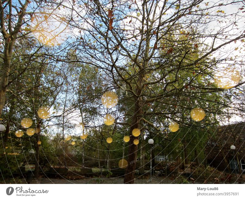 Autumn trees in park with reflection Park Green space Lamp Exterior shot Copy Space bottom Copy Space top Sky Blue View from the window birches golden