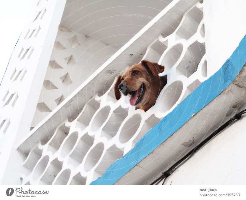 Dog White Loneliness Animal Facade Happiness Observe Curiosity Contact Balcony Pet Boredom Brash Portugal Interest Smart