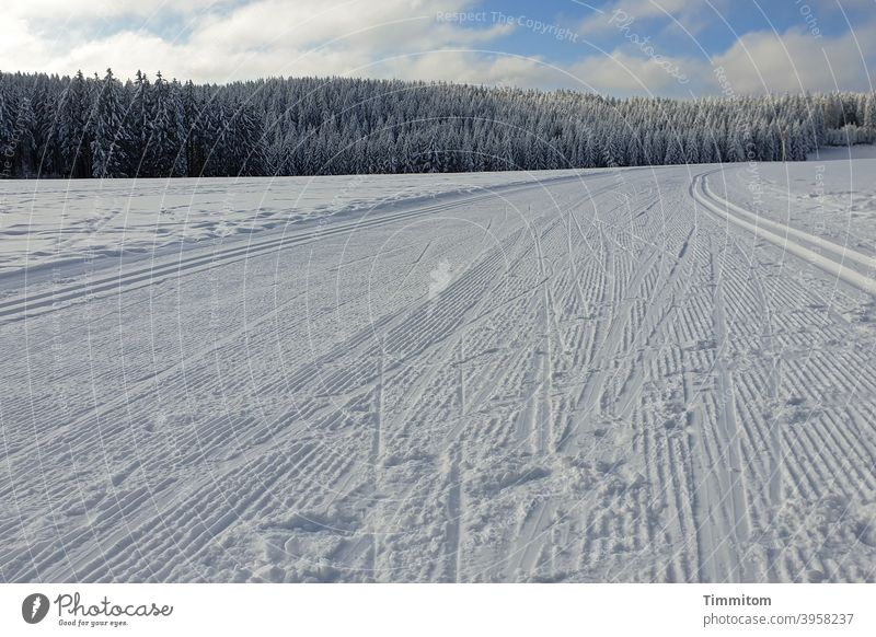 Winter joys - cross-country ski trail Cold Snow Black Forest cross-country skiing Cross-country ski trail Sky Blue Clouds Landscape Nature White Deserted trees