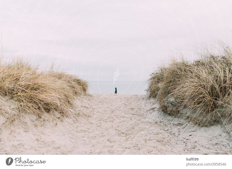 a lonely man at the seaside between the dunes Marram grass stage Human being Loneliness Autumn Winter Ocean North Sea coast Landscape Beach Nature