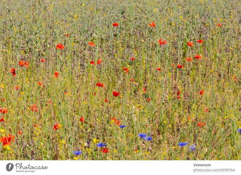 meadow flowers in summer Wildflowers Flower Weed grasses Meadow Flower Blossom Blossoms Nature Nature Plants Nature Flowers Spring