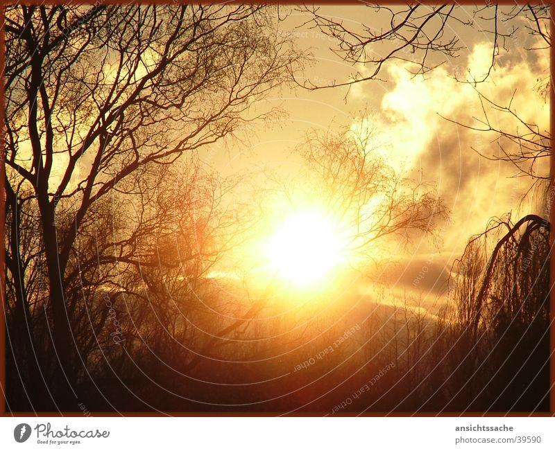 Tree Sun Calm Clouds Power Branch Sunrise