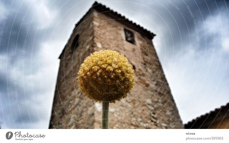 David and Goliath Tourism Trip Summer Art Architecture Sky Clouds Weather Beautiful weather Plant Flower Blossom Foliage plant Exotic Small Town Deserted Church
