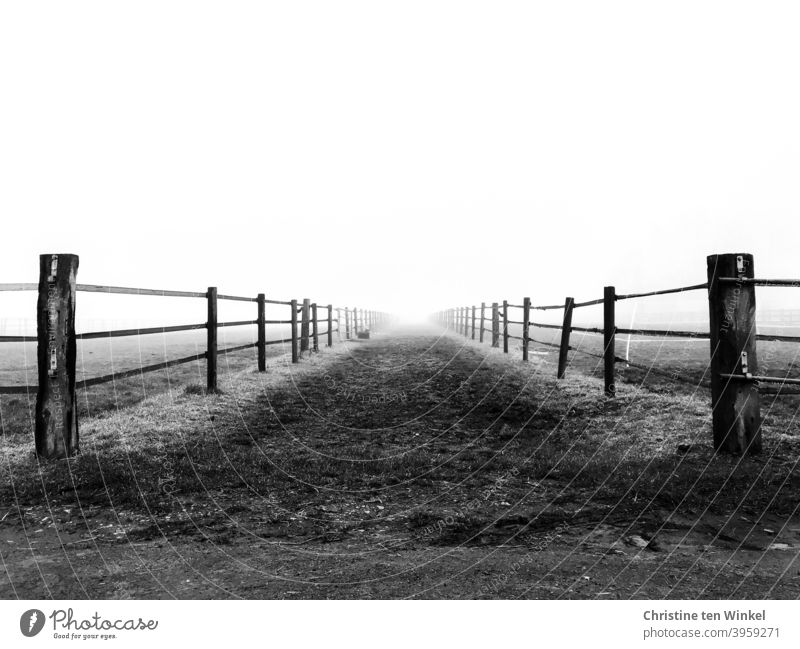 The dirt road between the fences leads into the brightness off the beaten track Fences Black & white photo Ambiguous Lanes & trails aims Exterior shot Deserted
