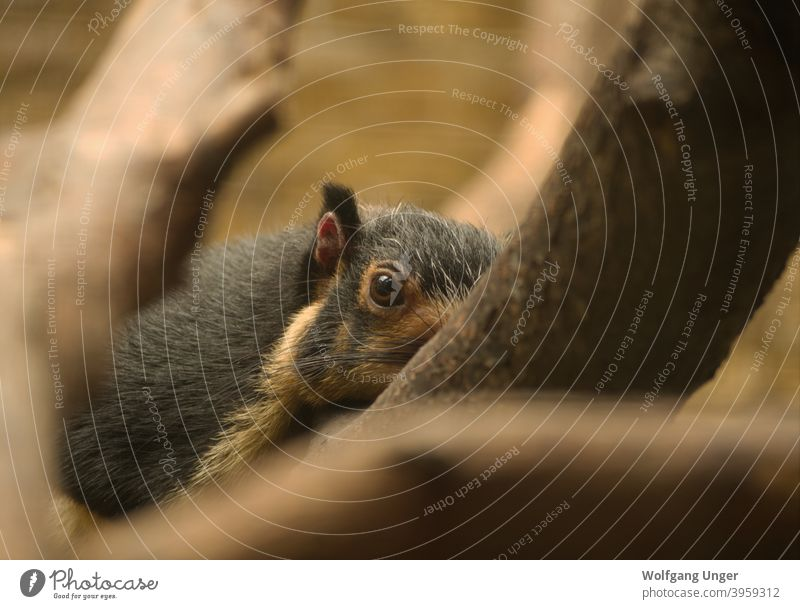 I am watching you at leipziger zoo mammal nature animal animals germany Leipzig summer perspective indoor cute