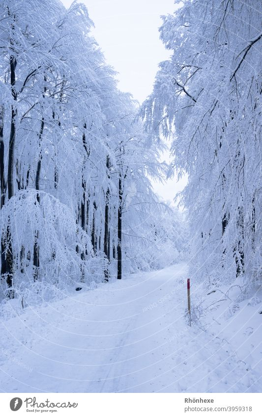 A snowy lonely path in the winter forest Winter Snow Tree Cold Frost White Forest Exterior shot Deserted Nature Day Colour photo Snowscape Winter forest