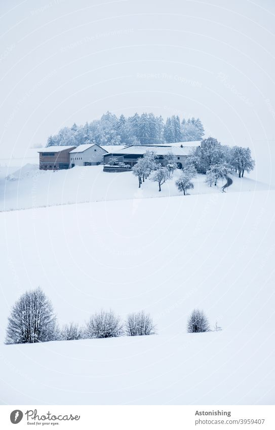 Snowed in farm on a hill Farm Winter Hill winter landscape Nature Landscape House (Residential Structure) Agriculture White Bright Cold chill SnowValley