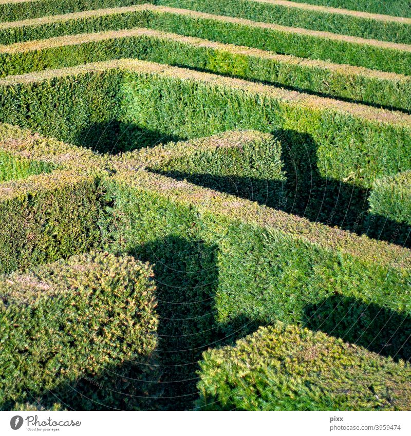 to err is human Maze Hedge flora Garden Park Castle grounds park Shadow Sun off search Find lines Geometry Exit route Tuja Doomed forsake sb./sth. Shadow play